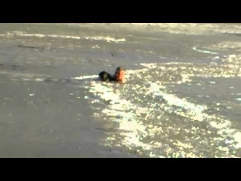 Мъж рискува живота си, за да спаси своето куче