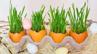 Пасхальный декор ☆ Проращиваем пшеницу