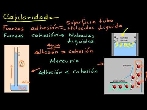 capilaridad. - Como ocuure el fenomeno de capilaridad. Ejemplos.
