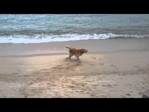 沙灘上開心狗