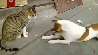 Video Angry Cats VS Dogs Funny Compilation 2017 !!! MP3, 3GP, MP4, WEBM, AVI, FLV April 2019