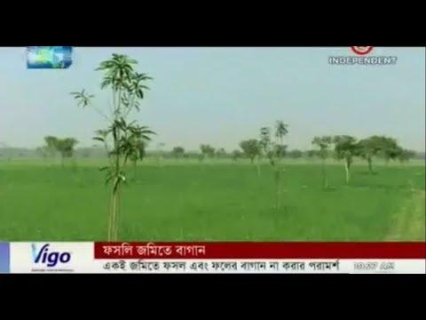 Farmland turns into orchard as land loosing fertility (20-02-1018)