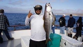 Birthday White SeaBass - Pacific Islander • Channel Islands Sportfishing