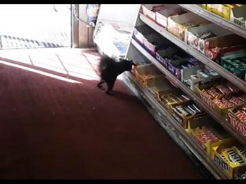Kleptomaani orava varkaissa – STOLEN: Kinder Bueno ($2.00)