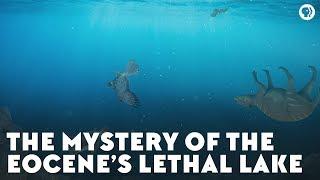 Video The Mystery of the Eocene's Lethal Lake MP3, 3GP, MP4, WEBM, AVI, FLV Juli 2019