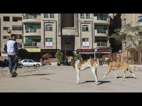 Ägyten: Herumstreunende tollwütige Hunde in Kairo