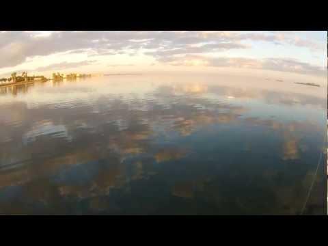 Wade Fishing New Year's Eve – Dunedin, FL 12/31/11