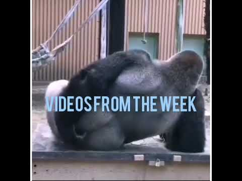 VIDEOS FROM THE WEEK - JokePit