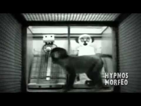 El Experimento del Afecto Harlow el origen de la violencia (видео)