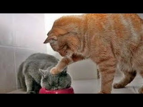 Animals Can Be Jerks - Supercut Compilation 2013