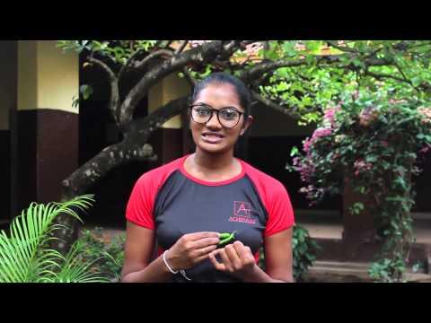 Gindara Videos