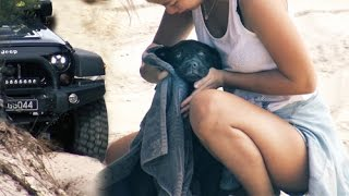 Teds (our cute labrador puppy) first ever camping and offroading trip to the beach.Jeep Wrangler JK (3 inch lift, 37 inch tyres, J.W. Speaker lights and more)Jeep Wrangler JK (3,5 inch lift, 35 inch tyres and more)Ted is turning 1 year in 2 weeks and this video is dedicated to him :)Mad Jeeps Shophttp://www.madjeeps.com.auFor more Go4x4 videos please subscribe to our channel:http://www.youtube.com/go4x4mediaOr follow us on Facebook:http://www.facebook.com/go4x4mediaInstagram:https://instagram.com/go_4x4/