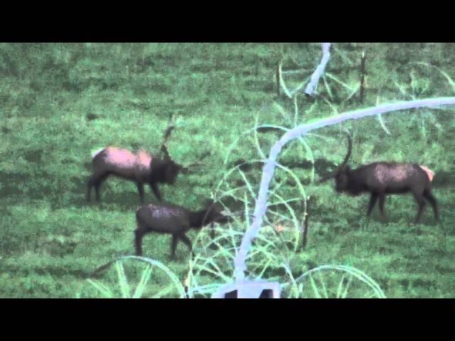 2014 Bull Elk - 1