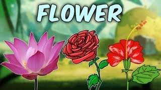 Nonton Learn English Flower Names With Pictures   Characteristics Of Different Flowers   Educational Videos Film Subtitle Indonesia Streaming Movie Download