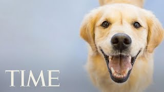 Dogs are more than just cuddly companions — research continues to show that pets bring real health benefits to their owners.Subscribe to TIME ►► http://po.st/SubscribeTIME Get closer to the world of entertainment and celebrity news as TIME gives you access and insight on the people who make what you watch, read and share.https://www.youtube.com/playlist?list=PL2EFFA5DB900C633F Money helps you learn how to spend and invest your money. Find advice and guidance you can count on from how to negotiate, how to save and everything in between.https://www.youtube.com/playlist?list=PLYOGLpQQfhNKdqS_Wccs94rMHiajrRr4W Find out more about the latest developments in science and technology as TIME's access brings you to the ideas and people changing our world.https://www.youtube.com/playlist?list=PLYOGLpQQfhNIzsgcwqhT6ctKOfHfyuaL3 Let TIME show you everything you need to know about drones, autonomous cars, smart devices and the latest inventions which are shaping industries and our way of livinghttps://www.youtube.com/playlist?list=PL2862F811BE8F5623 Stay up to date on breaking news from around the world through TIME's trusted reporting, insight and accesshttps://www.youtube.com/playlist?list=PLYOGLpQQfhNJeIsW3A2d5Bs22Wc3PHma6CONNECT WITH TIMEWeb: http://time.com/Twitter: https://twitter.com/TIMEFacebook: https://www.facebook.com/time Google+: https://plus.google.com/+TIME/videosInstagram: https://www.instagram.com/time/?hl=enMagazine: http://time.com/magazine/Newsletter: time.com/newsletterABOUT TIMETIME brings unparalleled insight, access and authority to the news. A 24/7 news publication with nearly a century of experience, TIME's coverage shapes how we understand our world. Subscribe for daily news, interviews, science, technology, politics, health, entertainment, and business updates, as well as exclusive videos from TIME's Person of the Year, TIME 100 and more created by TIME's acclaimed writers, producers and editors. Evidence That Owning A Dog Is Really Good For You: Lower Stress Levels, Decreases Asthma Risk  TIMEhttps://www.youtube.com/user/TimeMagazine