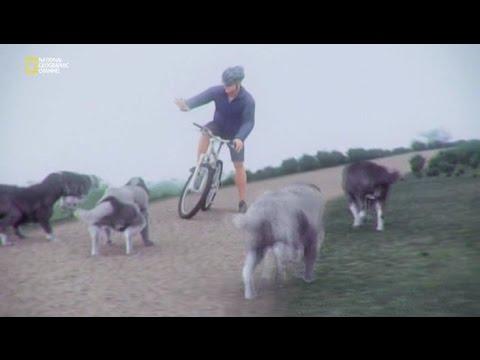 Правила безопасности велосипедиста. Как защититься от собак.