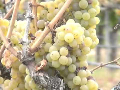San Ynez Wineries