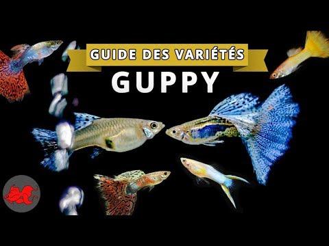 Guppy Guide des variétés