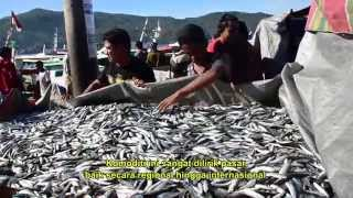 Bitung Indonesia  city photos gallery : The Skipjack Tuna Hunters of Bitung North Sulawesi