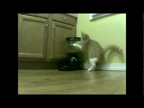 Cat Vs. Automatic Feeder