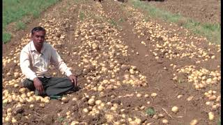 Potato Farmer (PowerAll)