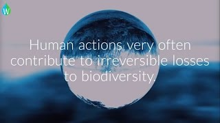 A video from Waterpedia on INTERNATIONAL DAY FOR BIOLOGICAL DIVERSITY 2017. International Day for Biological Diversity ...