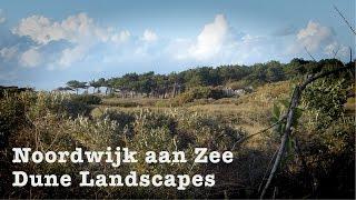 Noordwijk Aan Zee Netherlands  City new picture : Dune Landscapes Noordwijk aan Zee Netherlands