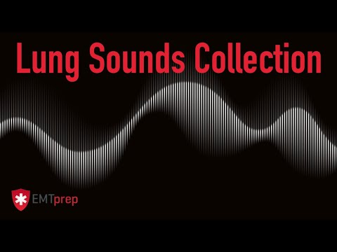 Lung Sounds Collection - EMTprep.com