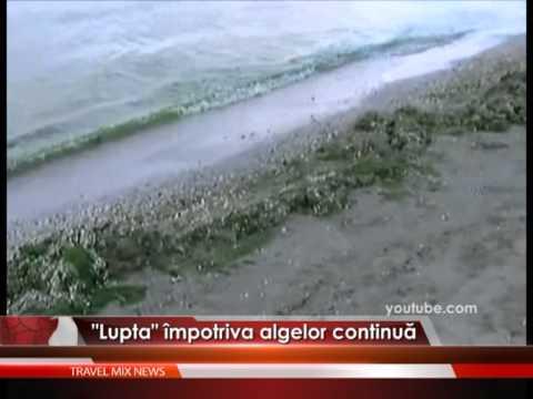 Lupta împotriva algelor continuă – VIDEO