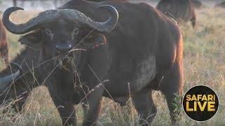 safariLIVE - Sunrise Safari - December 7, 2018