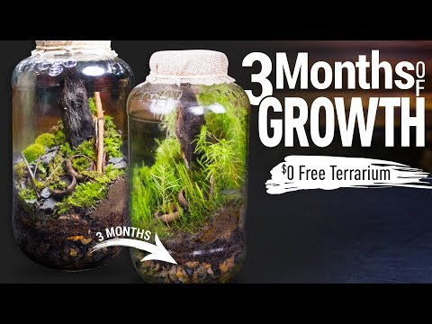 3 Month Update: $0 FREE Terrarium_Legjobb videók: Terrárium, Vivárium