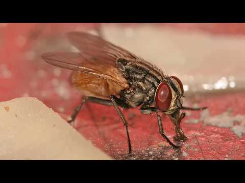 Interesting House fly Facts