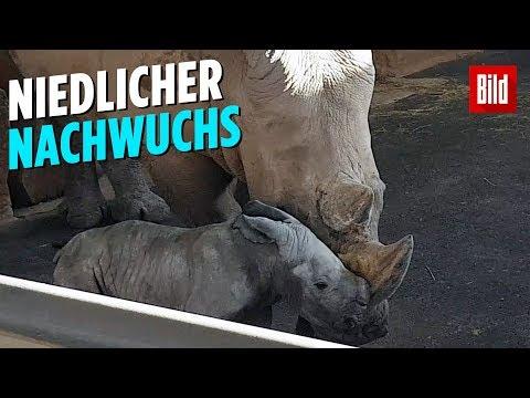 Erfurt: Erstes Nashorn-Baby im Erfurter Zoo seit zehn Jah ...