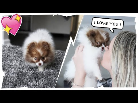 SURPRISING My GIRLFRIEND With A NEW PUPPY!! | Tricia & Kam