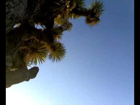 Early Peyote trip