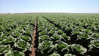 Yuma (AZ) United States  city photo : Yuma Arizona Lettuce Farm - America's Heartland