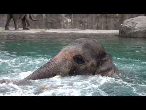 Iloinen norsu nautiskelee altaassa – Hauskaa on!