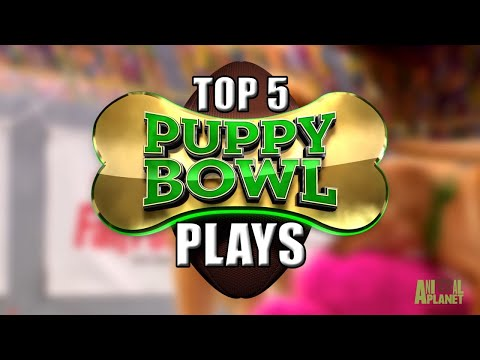Puppy Bowl Spot Center: Top 5 Plays