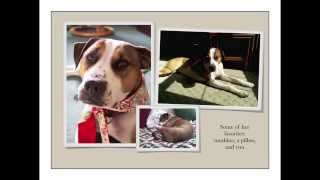Brooke - Boxer / Mixed (short coat) Dog For Adoption