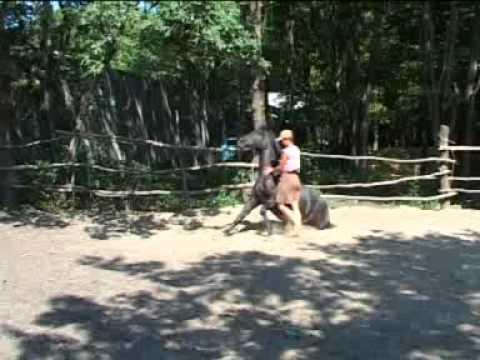 Фильм о зоопарке
