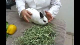 Pet Tips - Rabbit Diet