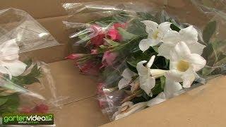 Die Verpackung von empfindlichen Topfpflanzen bei Lubera