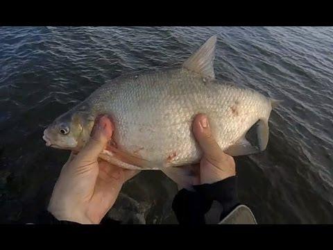 где ловят рыбу на дамбе в спб