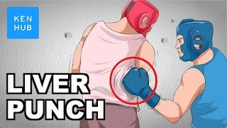 Video Why can't your body handle a punch to the liver? - Human Anatomy | Kenhub MP3, 3GP, MP4, WEBM, AVI, FLV Agustus 2019