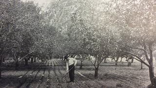 New Life for Old Orchards