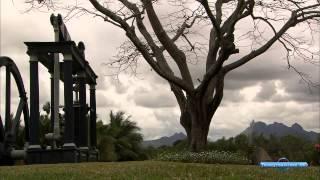 Остров Маврикий и Родригес