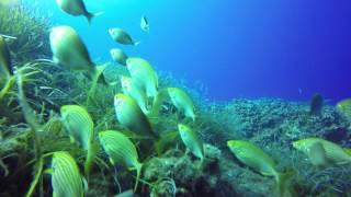 ustica underwater