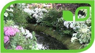 150 Jahre Hilier Nursery und der weisse Traumgarten