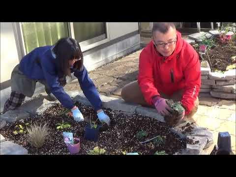 修景バラと一緒に宿根草を植える