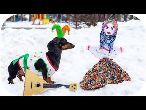 Funny animals - How DOG celebrate Russian Maslenitsa? Cute and funny animal video!